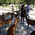 但是公鹿們不喜歡我們帶去的蘇打餅乾