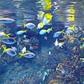 漂亮的熱帶魚類