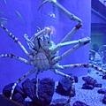 真的很像蜘蛛~我跟各位報告一下蜘蛛蟹其實很好吃XD