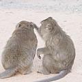 相愛的猴子