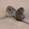 相愛的猴子2