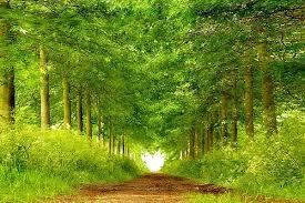 有心的道路