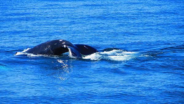 whale watch in boston