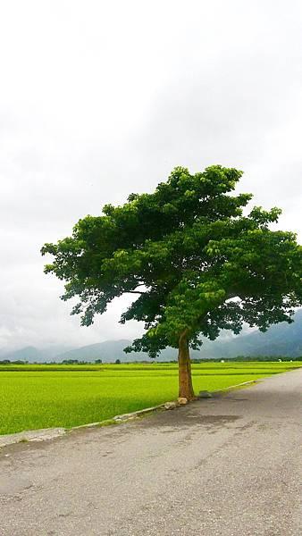 2014 高雄台東?日遊