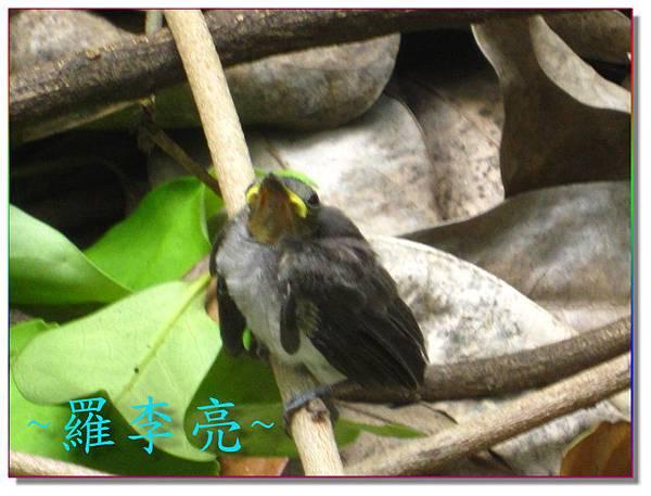 我是一隻小小鳥 012.jpg