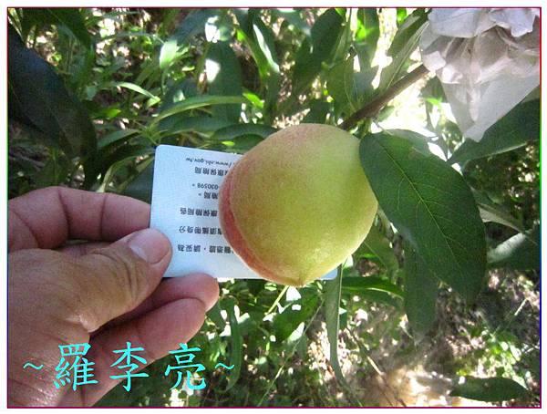 桃花朵朵開 021.jpg