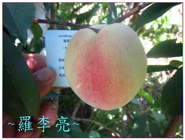 桃花朵朵開 023.jpg