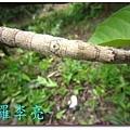 柳丁園 001 (21).jpg