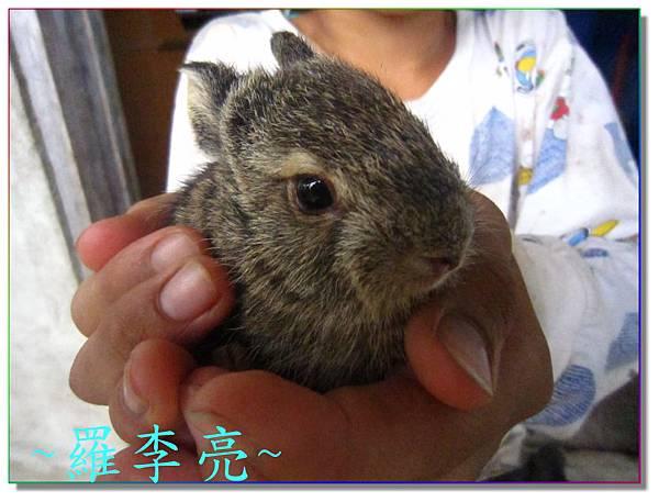 小野兔 004.jpg