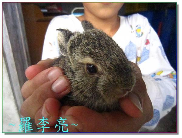 小野兔 005.jpg