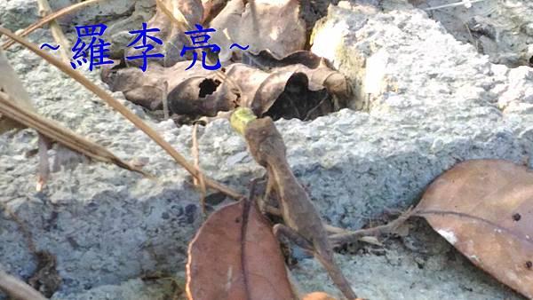 P_20151116_160359.jpg