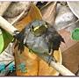 我是一隻小小鳥 017.jpg