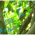 果園生態 091.jpg