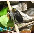 我是一隻小小鳥 011.jpg