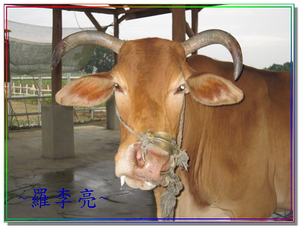 老牛的家 002.jpg