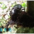 果園生態 097.jpg