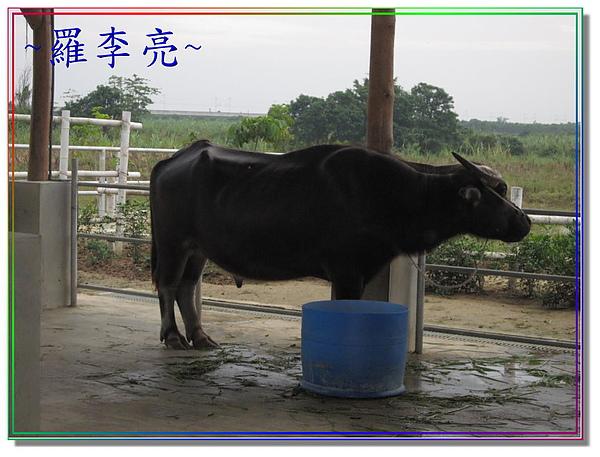 老牛的家 004.jpg