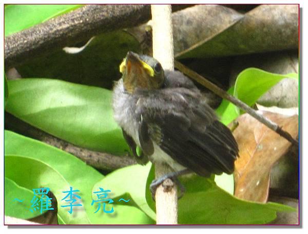 我是一隻小小鳥 014.jpg