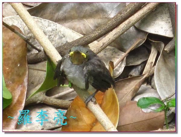 我是一隻小小鳥 010.jpg