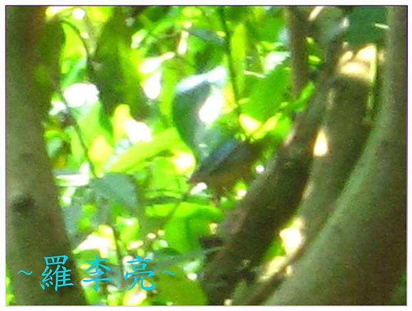 果園生態 092.jpg