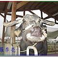 老牛的家 008.jpg