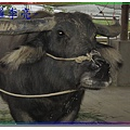 老牛的家 005.jpg
