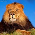 獅子1.jpg