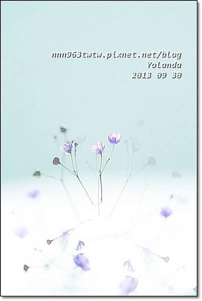 POG_0245