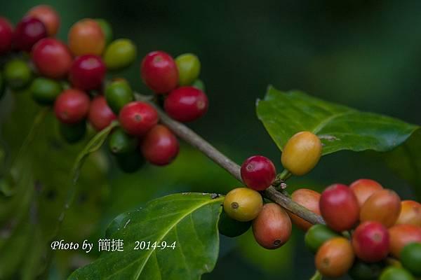 DSC_4729G,-咖啡-(D200-&-VR-28-300mm)-#S,-2014-9-4