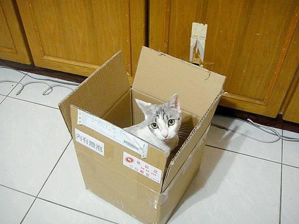 KIKI喜歡躲在箱子跟我玩.JPG