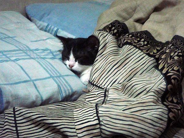 窩在棉被睡覺.JPG