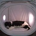 哈囉把攝影棚當成貓窩.JPG