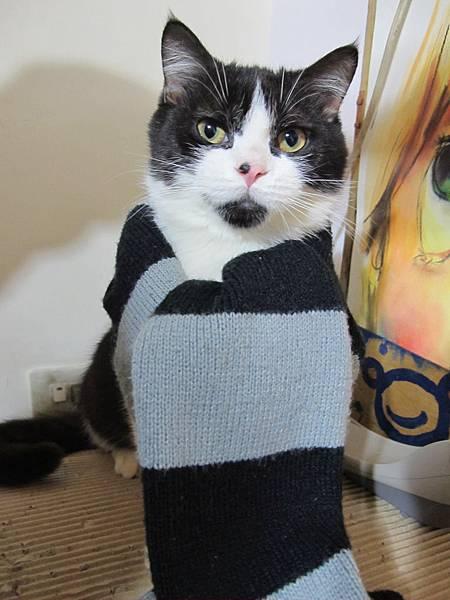 好冷的冬天~哈囉用圍巾.JPG