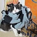 好冷的冬天~哈囉用圍巾 (3).JPG