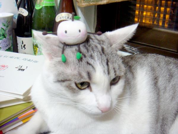 和KIKI玩的小饅頭2.JPG