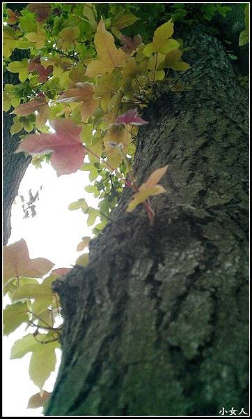 IMAG0674