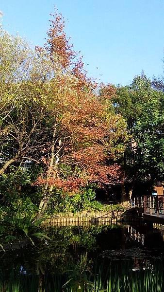植物園景色 (4)