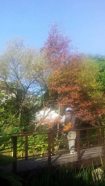 植物園景色 (6)