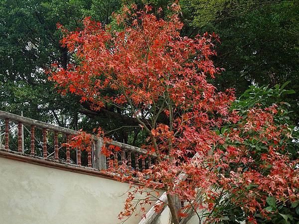 林家花園 195.JPG