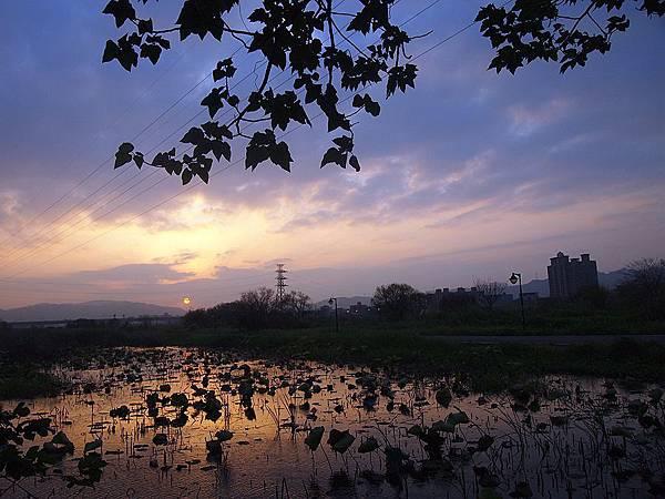 夕陽映荷塘 026.JPG