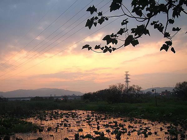 夕陽映荷塘 058.JPG