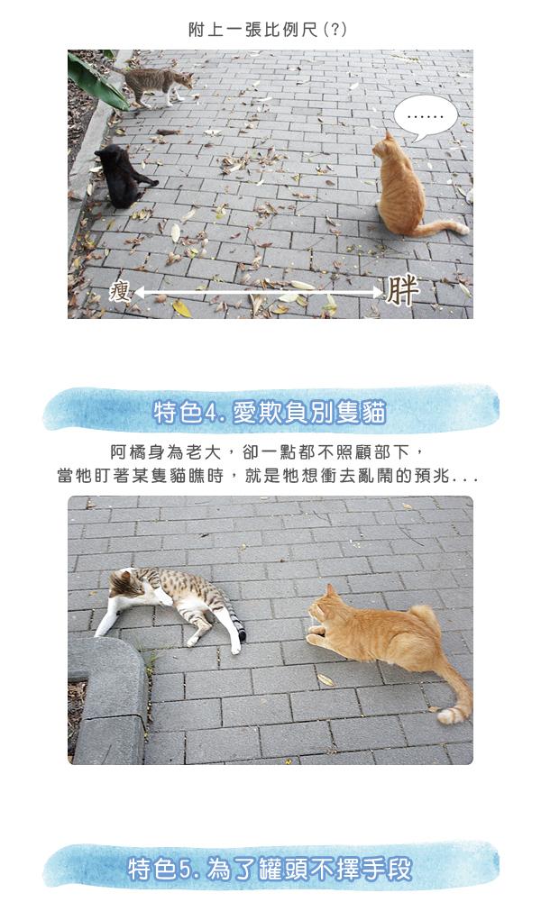 阿橘大剖析1-03.jpg