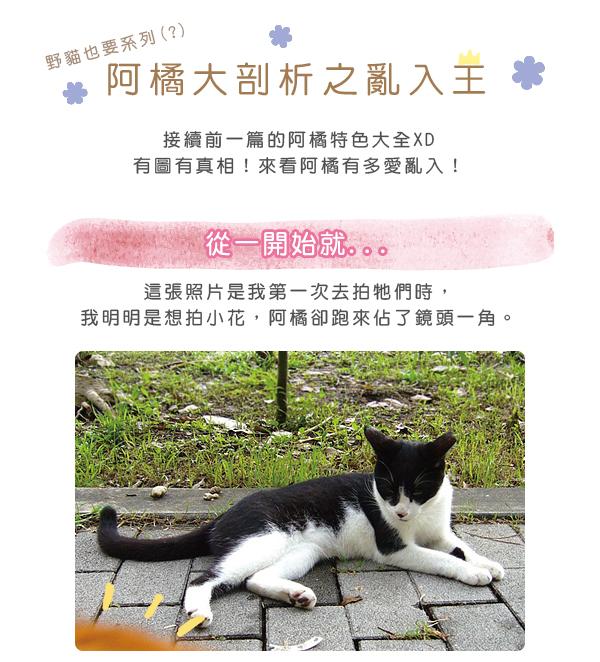 阿橘大剖析2-01.jpg