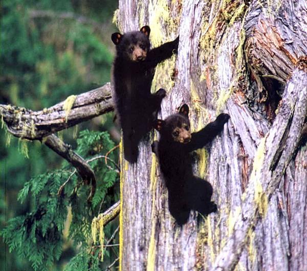 熊熊惹人愛