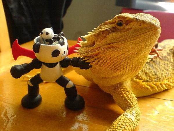 嚐嚐panda-z的鐵拳!!