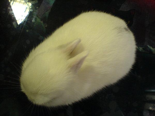 有這種滑鼠我一定會買