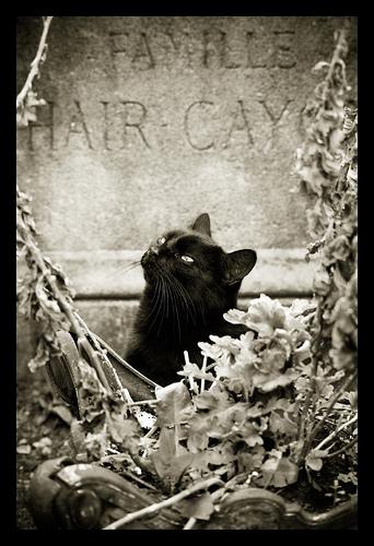 noircat.bmp