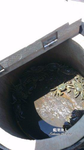 厚蟹〈青蚶〉