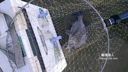 塭仔港前打黑鯛