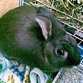 仙太郎2008-11-16(4)